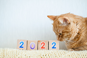 ◆名入れカレンダー:名刺代わりのギフトにいかがですか?
